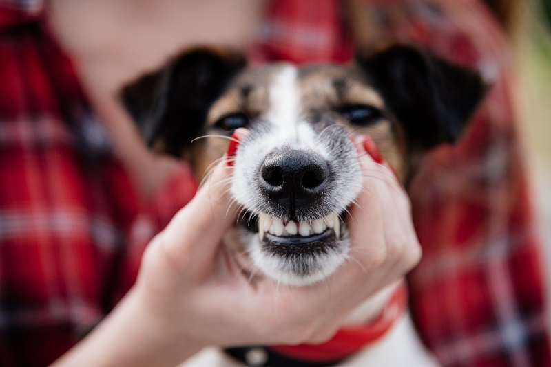 Pet Dental Hygiene Everything You Need to Know