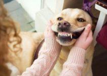 Periodontal Disease in Pets